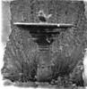 35mm B/W film - My Garden, Gordon, Canberra, ACT, Australia (John Panneman Photography) Tags: bw blackwhite australia olympus gordon canberra mygarden act om1n