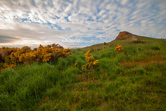 Bushes at Roseberry Topping (Chris Rayner Darlo) Tags: green beautiful yellow cleveland hills climbing middlesbrough bushes iconic teesside guisborough topping roseberry