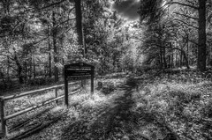 Uncommon Forestry (Martin_Finlayson) Tags: light ir nikon shadows d70 path surrey infrared tamron hdr crooksbury photomatix forestrycommission 1024mm silverefex