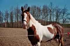 (Monica Forss) Tags: horse film analog 35mm sweden analogue malm fujisuperia200 minoltaprod20s