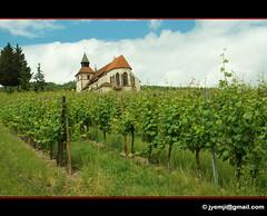 Chapelle Saint-Sbastien, Dambach-la-Ville 9357 (Hatuey Photographies) Tags: vineyard vines alsace vignoble chapelle basrhin dambachlaville chapellesaintsbastien hatueyphotographies hatueyphotographies