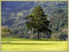 Verdejante imagem (o.dirce) Tags: naturaleza verde green nature brasil riodejaneiro natureza árvore mata vegetação odirce vegetaçãotropical photographyforrecreation