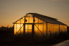 Sunrise in the green house (Colin-Powell) Tags: morning light sky glass sunrise canon dawn greenhouse heat 7d
