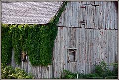 Peek A Boo Pony (Nux Pix (Home Treating a Tough Knee Injury)) Tags: horse barn rural canon pix farm country sydney ivy missouri nux 60d nuxpix