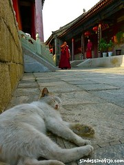 "Gato Wutai Shan • <a style=""font-size:0.8em;"" href=""http://www.flickr.com/photos/92957341@N07/9597509190/"" target=""_blank"">View on Flickr</a>"