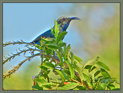 Blue bird (Dora-A) Tags: light flower color green nature beautiful landscape photography israel daylight colorful mediterranean day view bright country north picture middleeast galilee scene foliage holyland hdr mideast blooming flourishing   doraa northernkingdomofisrael