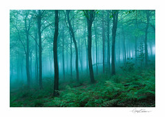 Ancient Forest (George-Edwards) Tags: southwest aonb ferns beech light dark moody nature landscape england isleofwight sunrise dawn fog mist trees woodland forest brighstone