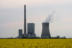 Coal power-plant and oilseed rape