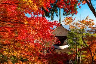 多宝塔 - 紅葉の常寂光寺 / Jyoujyakkou-ji Temple