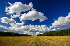 Tranbygge, Upplands-Bro, Sweden (Marc Arnoud Rogier van der Wiel) Tags: trees sky cloud field landscape nikon sweden outdoor d600 1635mm kungsängen upplandsbro