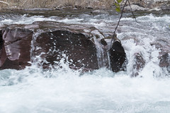 """Rapids on McDonald Creek • <a style=""""font-size:0.8em;"""" href=""""http://www.flickr.com/photos/63501323@N07/17730485205/"""" target=""""_blank"""">View on Flickr</a>"""