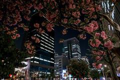 Sakura-Dori, Marunouchi, Nagoya (kinpi3) Tags: street japan night nagoya gr ricoh marunouchi sakuradori