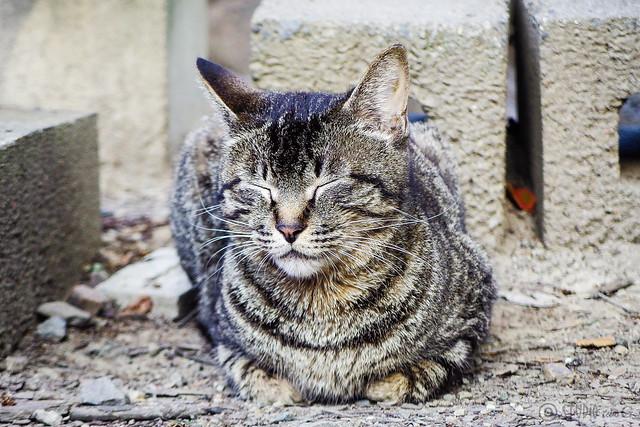 Today's Cat@2015-05-25