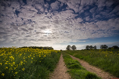 The end of the track... (aljones27) Tags: sky cloud field grass countryside path country meadow cambridgeshire bridleway oilseedrape stukeley 09hardgrad 06hardgrad