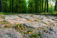 Kopfsteinpflaster in der Caselower Heide (Satho73) Tags: architektur deutschland fahrenwalde herkunft kopfsteinpflaster mecklenburgvorpommern uckermark