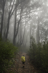 Foggy Forest (dan_walk) Tags: victoria wilsons promontory prom national park natuer vegetation plants trees outside outdoors green misty foggy fog mist path walking hike hiking walk tramp treck trecking tramping camping australia yellow brown girl big small tall fade white forest woods