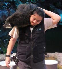 Night Safari, Singapore Zoo, October 2016 (rsilva444) Tags: singapore zoo nightsafari