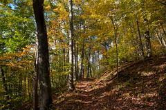 Dodge Run Color (thoeflich) Tags: washingtoncountycareercenter falllandscape fallcolors fallcolor autumncolors autumnleaves autumnlandscape oct2016