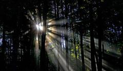 komorebi  170A2687 (Ricardo Gomez A) Tags: komorebi luz light licht baum arbol tree son sun sol