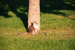 DSC_0037 (RD1630) Tags: town city gomel belarus travel trip reisen cat katze sunny tree green grass shadow