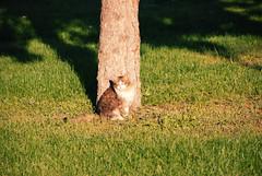 DSC_0037 (RD1630) Tags: town city gomel belarus travel trip reisen cat katze sunny tree green grass shadow