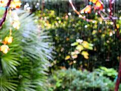 Sun, rain and colors (alex.gb) Tags: rain sun thunder lightning autumn garden sunrainandcolors colors impressionsexpressions clickcamera damncool italians ngc