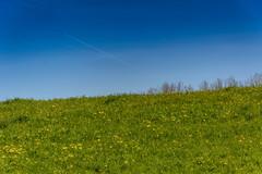 two halves (stevefge) Tags: green blue dijk dike sky grass