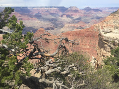 Grand Canyon (James B Currie) Tags: grandcanyon arizona nationalpark june 2016 vacation travel