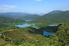 Crocodiles like islands. (Go Go Janet) Tags: teaplantation teagarden lake