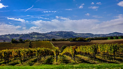 Autumn in Marche's hill (treeffe2000) Tags: marches vineyards vine golden red yellow blue fujifilm xt1
