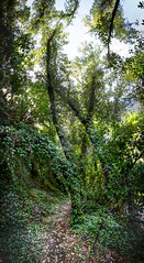 Entering the forest (Jose Mara Ruiz) Tags: entering forest entrando bosque panoramica arboles duendes gnomos hojas otoo andar panoramic trees trolls gnomes leaves autumn walk espaa andalucia mlaga spain andalusia malaga genalguacil jubrique benalauria sol sun sombra shadow