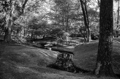 Japanese Garden Spring Afternoon (Shutterbatte Photography) Tags: woodland trees spring f100 nikon woods kentmere stream richmond nature blackandwhite 35mm analog maymont