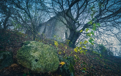 Faded in Time (@hipydeus) Tags: hill ruin enchanted haunted tree walls castle germany