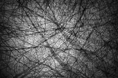 law of connections (Lamson*Nu~wen ()) Tags: trees branches abstract monochrome bw blackandwhite lamson fall connections multiplexposures ricoh