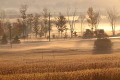Lifting Fog (peterkelly) Tags: digital ontario canada northamerica canon 6d brisbane fall morning autumn mist fog trees dawn sunlight sunlit field road light