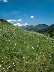 foresight / Weitsichtig (konstantin oxy) Tags: berge schnee himmel foresight sky shnow mountains scenery hill pasture grass plant