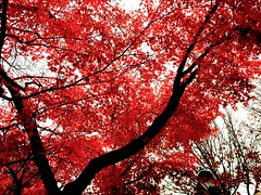 Images-of-late-fall--2015-12-02-13.19.04.04 (mbgmbg) Tags: desaturate fall fallfoliage kw2flickr kwgooglewebalbum kwphotostream5 kwpotppt saturation series seriesfallfoliage16 takenbymarkgerstein trees treesandsky yale