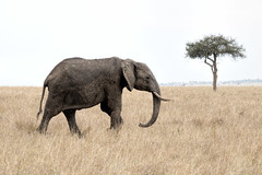 in need of a shower (PhilHydePhotos) Tags: africa elephants safari serengeti tanzania wildlife