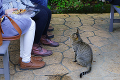 Can I have meatball ? () Tags:         cat kitty feralcat animal pretty outdoor askfor japan