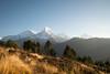 South Annapurna (cbouchon) Tags: annapurnai machhapuchhre paysage népal montagne temps sommet hiunchuli annapurnasud leverdesoleil neige massifdelannapurna nã©pal ghodepani westernregion np