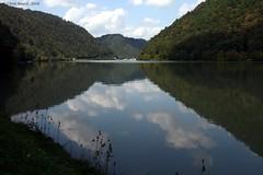Daanube reflection