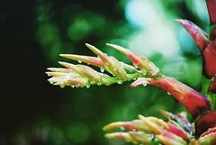 IMG_6589 (sosparkly) Tags: instagram nature trees plants paris england edinburgh florida bermuda beach whimsy
