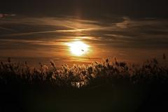 Homme libre, toujours tu chriras la lumire (Emmanuelle2Aime2Ailes) Tags: coucherdesoleil ciel roseaux camargue cmwdorange