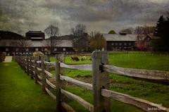 Vermont Farm (RaeofGold) Tags: farm agriculture cows fence vermont texture distressedjewell raeofgoldphotography peeblespair