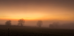 Misty Sunset (Ian Emerson) Tags: trees tree mist fog sky colourful warmth landscape autumnal autumn november staffordshire outdoor canon omot countryside