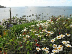 St Mawes Castle Garden (Mike.Dales) Tags: stmawescastle englishheritage roselandpeninsular falestuary carrickroads cornwall england flowers summer fantasticnature