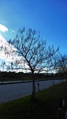 Δισπιλιο Καστορια P1280108 (omirou56) Tags: 169ratio panasoniclumixdmctz40 ελλαδα ελλασ δρομοσ δεντρο ουρανοσ συννεφα δισπιλιο καστορια ταξιδι γαλαζιο street tree hellas greece sky blue clouds