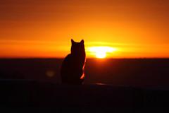 IMG_4651 (Sergey Kustov) Tags:     russia pyatigorsk stavropolskiy dawn sunrise cat   sun