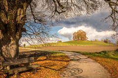 Growing old together (hjuengst) Tags: ebersberg vogelberg limetree linden bench nikond7200 autumn path riedhof clouds