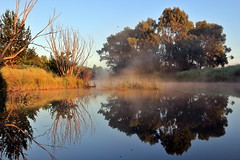 Wingecarribee River #1 (alden0249) Tags: australianlandscape dawn light mist nature sunrise